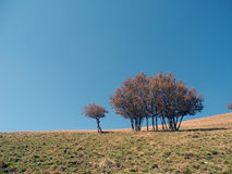 Aarde en hemel Stock Fotografie