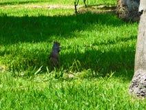Aardeekhoorn die aan zijn moeder in zonlicht wachten Royalty-vrije Stock Foto