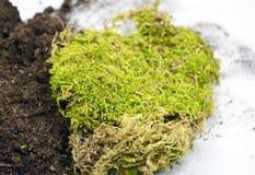 Aardestuk van grond met mos royalty-vrije stock foto's