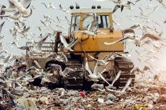 Aardeverhuizer op een stortplaats met zeemeeuwen Stock Fotografie