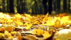 Aardgang in de herfst Een mens loopt in de herfst forestMan in de herfstpark stock video