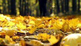 Aardgang in de herfst Een mens loopt in de herfst forestMan in de herfstpark stock videobeelden