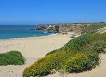 Aardig Doon Strand met wildflowers, Californië Royalty-vrije Stock Afbeeldingen