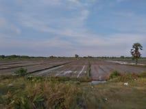 Aardig Paddy Field in Sri Lanka stock afbeelding