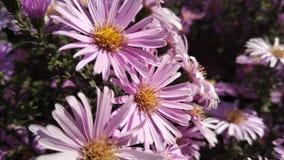 Aardige bloem royalty-vrije stock afbeelding