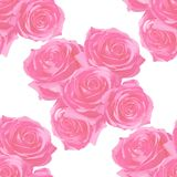 aardige rozen op gevoelige achtergrond stock afbeeldingen