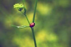 Aardinsect royalty-vrije stock afbeelding