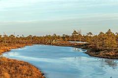 Aardlandschap met ijzig koud moeras met ijzige grond, ijs op moerasmeer en slechte moerasvegetatie stock foto's