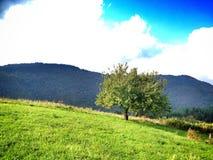 aardlandschap op de berg Stock Foto