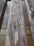 Aardlijn in het hout Royalty-vrije Stock Afbeelding