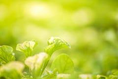 Aardmening van groene bladeren onder de zon Natuurlijke groene boom ons Royalty-vrije Stock Afbeelding