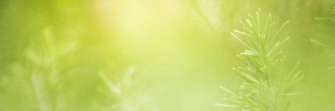 Aardmening van groene bladeren onder de zon Natuurlijke groene boom ons Stock Afbeeldingen