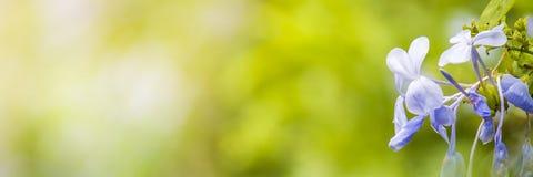 Aardmening van groene bladeren onder de zon Natuurlijke groene boom ons Stock Afbeelding