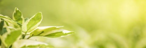 Aardmening van groene bladeren onder de zon Natuurlijke groene boom ons Stock Foto's