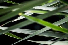 Aardmening van groene bladeren onder de zon Natuurlijke groene boom ons royalty-vrije stock afbeeldingen