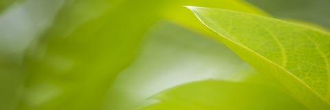 Aardmening van groene bladeren onder de zon Natuurlijke groene boom ons royalty-vrije stock foto