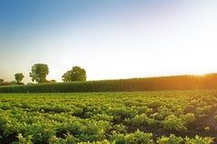 Aardnotenlandbouwbedrijf stock afbeeldingen