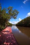 Aardslepen in Mangrovebos met blauwe hemel Royalty-vrije Stock Afbeelding