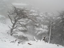aardsneeuw Stock Foto's