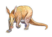 Aardvark. The biggest animal digging the earth Royalty Free Stock Photography