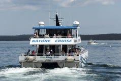 Aardwalvis het letten op cruiseboot in Barhaven Maine Royalty-vrije Stock Foto's