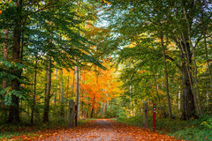 Aardweg in een Deens bos bij de herfst stock afbeeldingen