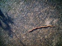 Aardworm het Kruipen royalty-vrije stock afbeeldingen