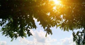 Aardzonsondergang door de bladerenboom op blauwe hemel Royalty-vrije Stock Foto