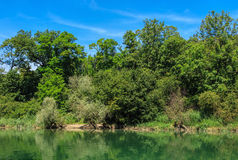 The Aare river in Switzerland in summer Royalty Free Stock Image