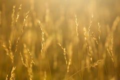 Aartjes in de weide bij dageraad, natuurlijke achtergrond royalty-vrije stock afbeeldingen