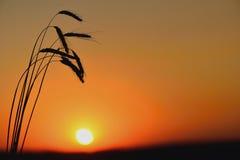 Aartjes en de zonsopgang op het gebied Stock Fotografie