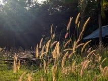Aartjes op het gebied bij zonsondergang royalty-vrije stock afbeeldingen