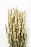 Aartjes van tarwe op een witte achtergrond royalty-vrije stock afbeeldingen