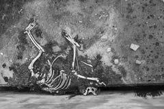 Aas absolut trocken Der skeleton Knochen des Hundes Stockfoto