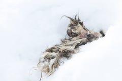 Aas des toten Tieres Stockfoto