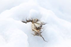 Aas im Schnee Lizenzfreies Stockbild