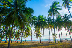 AAsia, country of Vietnam, Phan Thiet. Palm trees. Royalty Free Stock Images
