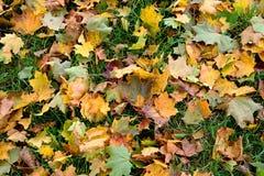 Aautumn-Blätter Stockfoto