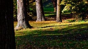 AAutumn krajobraz, drzewa, kolorowy park Fotografia Royalty Free