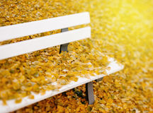 Aautumn leaves Stock Image