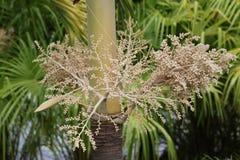 Abóbada da flor Fotos de Stock Royalty Free