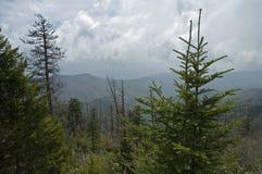 Abóbada de Clingmans, grandes montanhas de Smokey foto de stock royalty free
