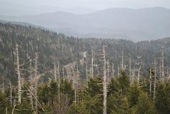 Abóbada fumarento de Clingmans das montanhas Imagem de Stock