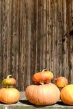 Abóbora Fotografia de Stock