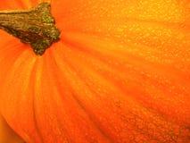 Abóbora alaranjada Fotografia de Stock