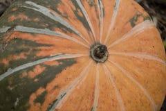 Abóbora alaranjada madura com as raias escuras que encontram-se na cama Imagens de Stock Royalty Free