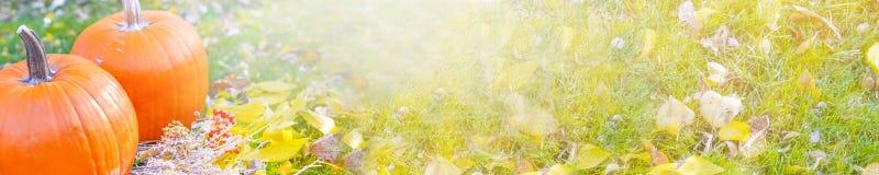 Abóbora alaranjada sobre o fundo outonal brilhante da natureza da beleza Autumn Thanksgiving Day Imagens de Stock