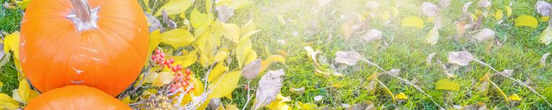 Abóbora alaranjada sobre o fundo outonal brilhante da natureza da beleza Autumn Thanksgiving Day Fotos de Stock
