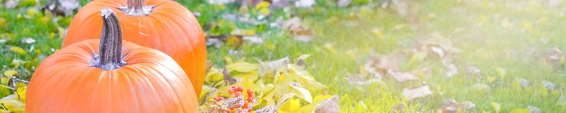 Abóbora alaranjada sobre o fundo outonal brilhante da natureza da beleza Autumn Thanksgiving Day Fotografia de Stock