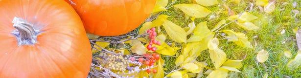 Abóbora alaranjada sobre o fundo outonal brilhante da natureza da beleza Autumn Thanksgiving Day Foto de Stock
